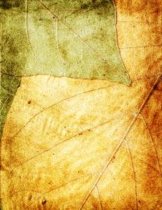 bladnerven